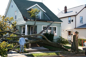 wind damage_72