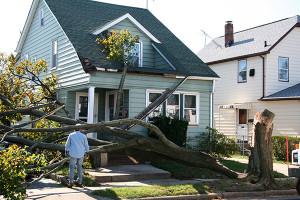 wind damage_72
