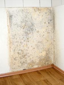 mold restoration_72